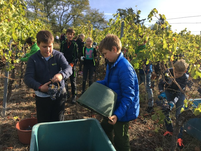 Weinbauprojekt Teil I 1819 (1)