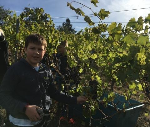 Weinbauprojekt Teil I 1819 (2)