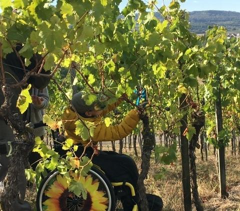Weinbauprojekt Teil I 1819 (3)