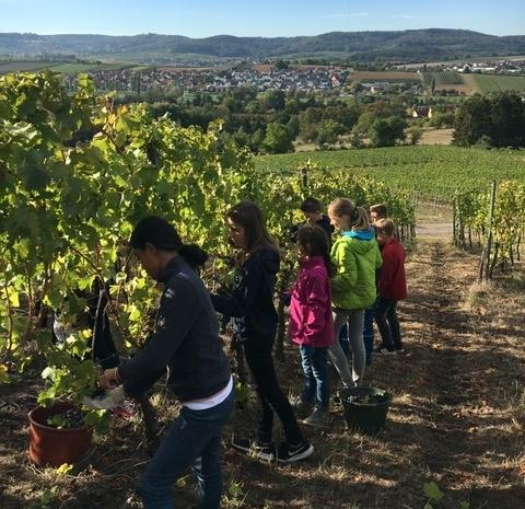 Weinbauprojekt Teil I 1819 (4)