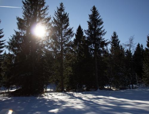 Seminarkurs debattiert Auswirkungen der Globalisierung mit Geflüchteten im Harz