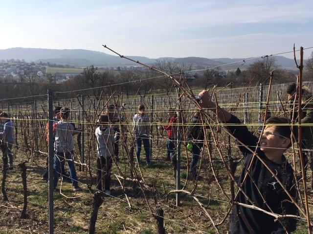 PDG Weinbauprojekt 2019