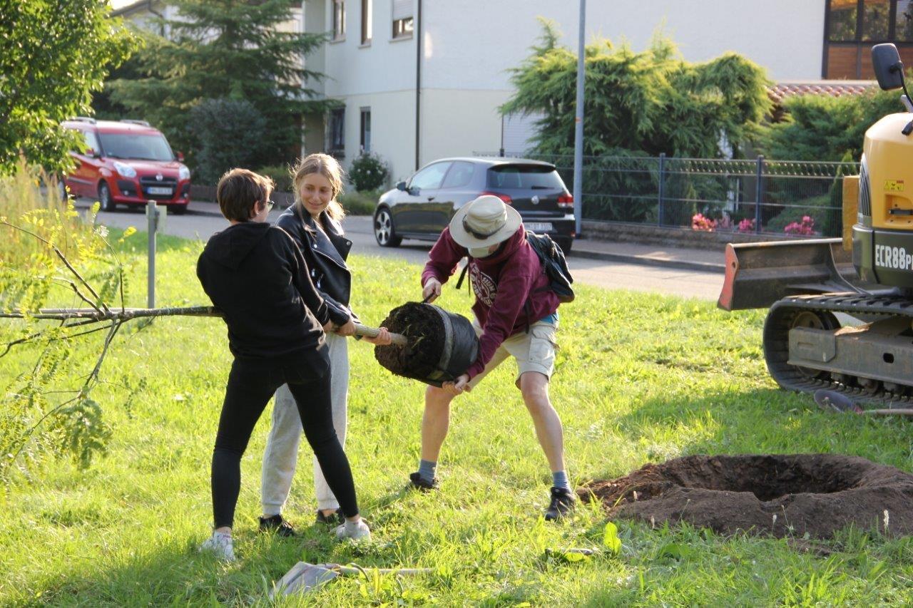 baumpflanzen-michelbachpark-2020-ev-pdg-obersulm (2)
