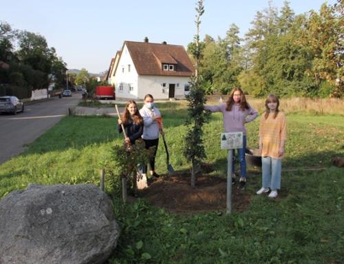 Nachhaltigkeitsprojekt Klassen 10 – neue Bäume für den Michelbachpark