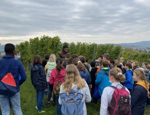 Weinbauprojekt 2021 – ab in den Weinberg